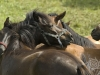 targi końskie w Lutowiskach